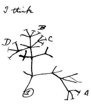 An image take from Darwin's notes where he considers the nature of genetic relatedness