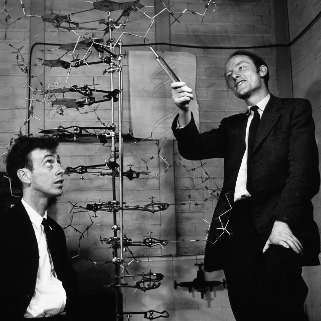 Watson and Crick, two of the scientists credited with discovering the structure of DNA, with a model of their proposal